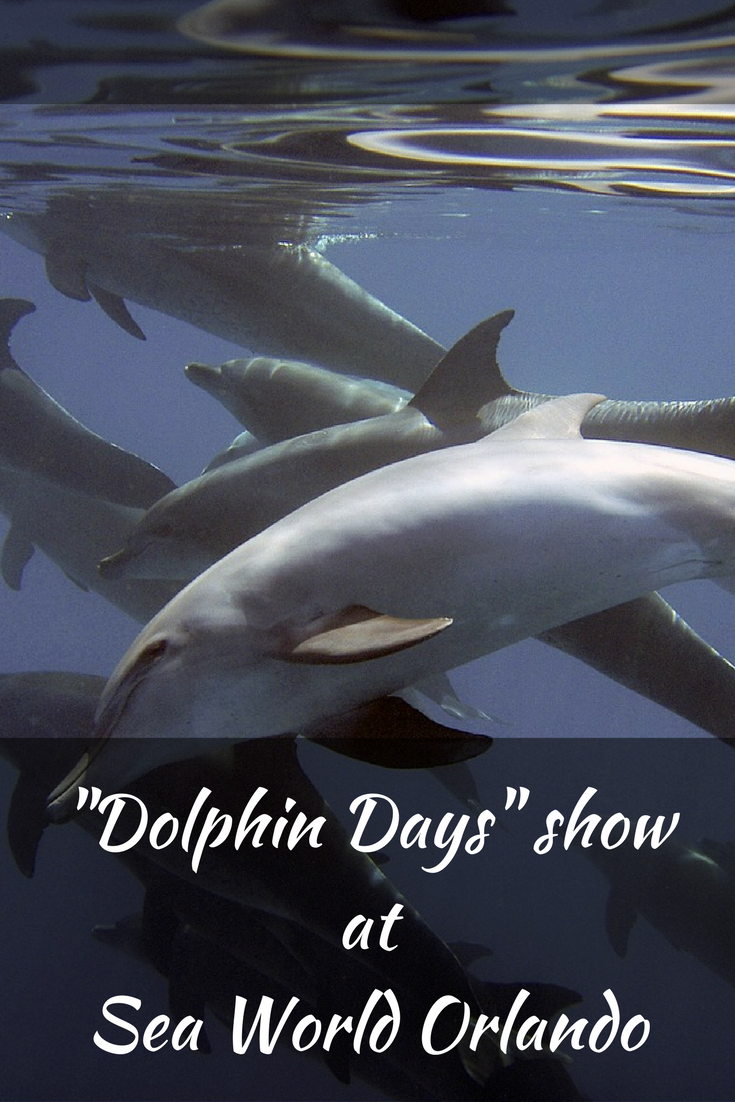 """SeaWorld Orlando Welcomes Spring with New Show """"Dolphin Days"""""""